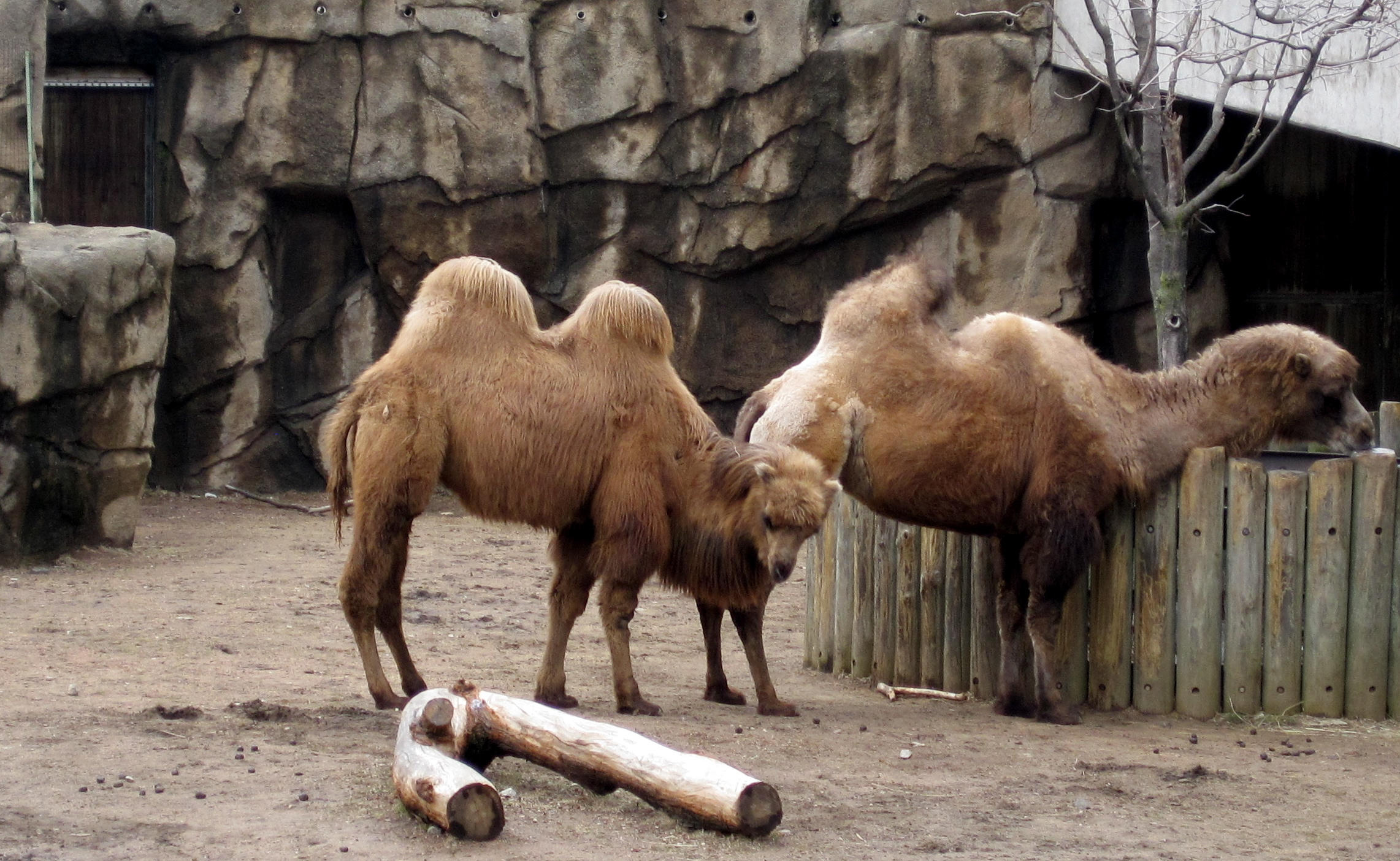 Camel On The Mat